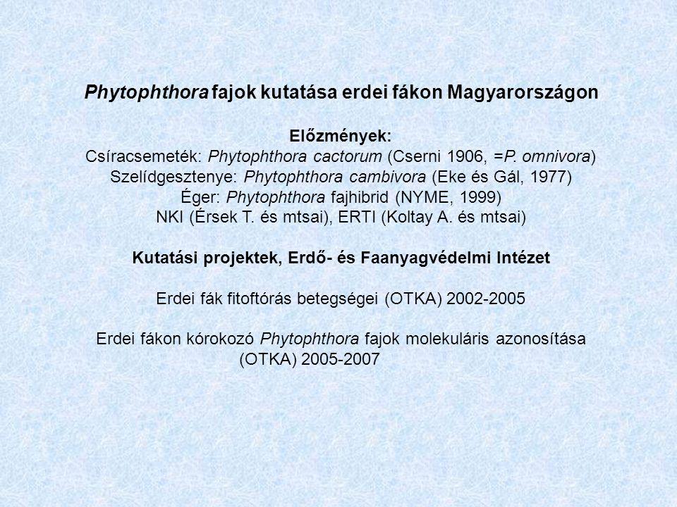 Phytophthora fajok kutatása erdei fákon Magyarországon Előzmények: Csíracsemeték: Phytophthora cactorum (Cserni 1906, =P.