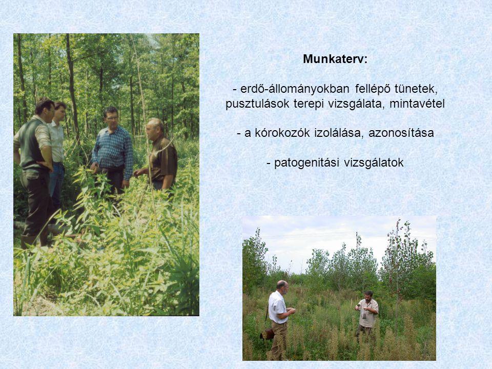 Munkaterv: - erdő-állományokban fellépő tünetek, pusztulások terepi vizsgálata, mintavétel - a kórokozók izolálása, azonosítása - patogenitási vizsgálatok