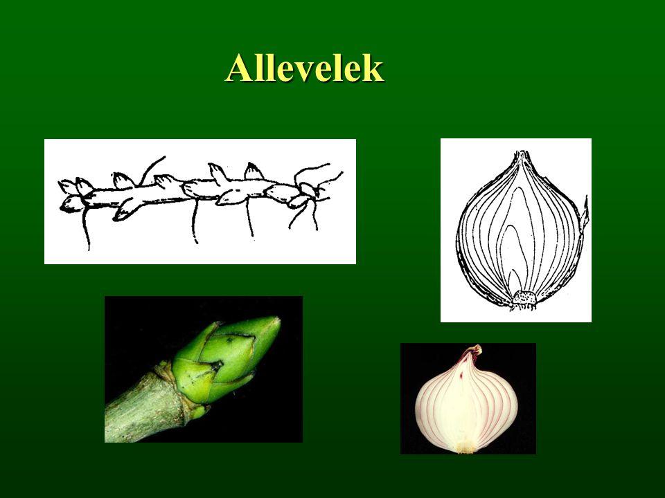 Fellevelek 1.murvalevél gallér, gallérka 2. pelyva, toklász (pl.