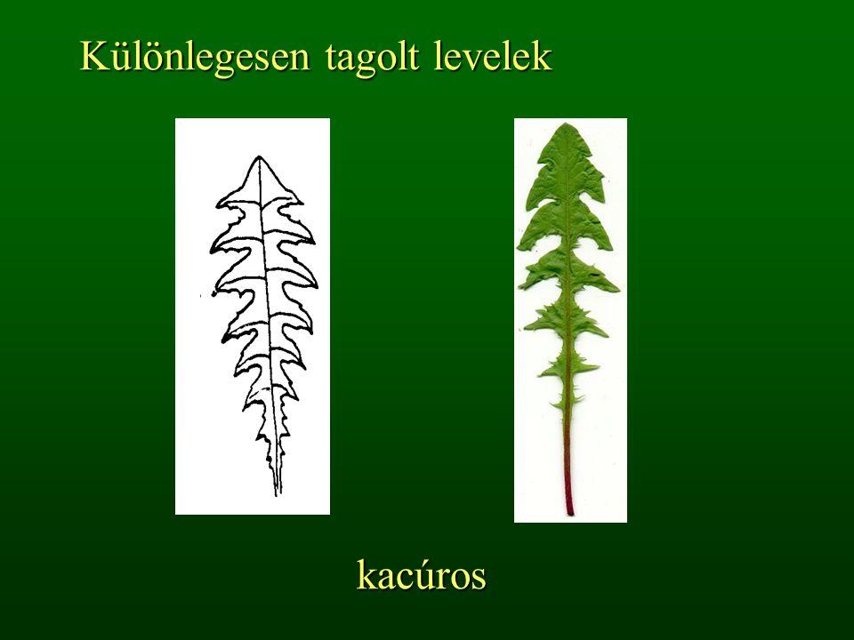 kacúros Különlegesen tagolt levelek