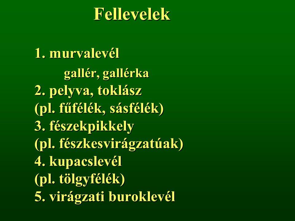 Fellevelek 1. murvalevél gallér, gallérka 2. pelyva, toklász (pl. fűfélék, sásfélék) 3. fészekpikkely (pl. fészkesvirágzatúak) 4. kupacslevél (pl. töl