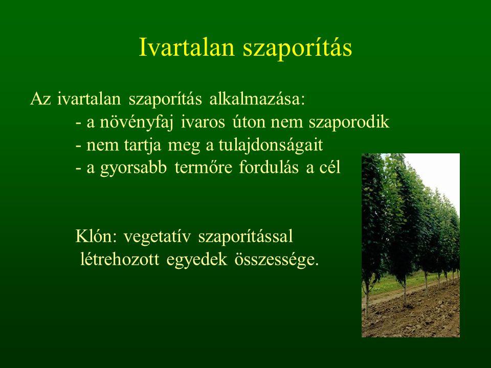 Ivartalan szaporítás Az ivartalan szaporítás alkalmazása: - a növényfaj ivaros úton nem szaporodik - nem tartja meg a tulajdonságait - a gyorsabb term