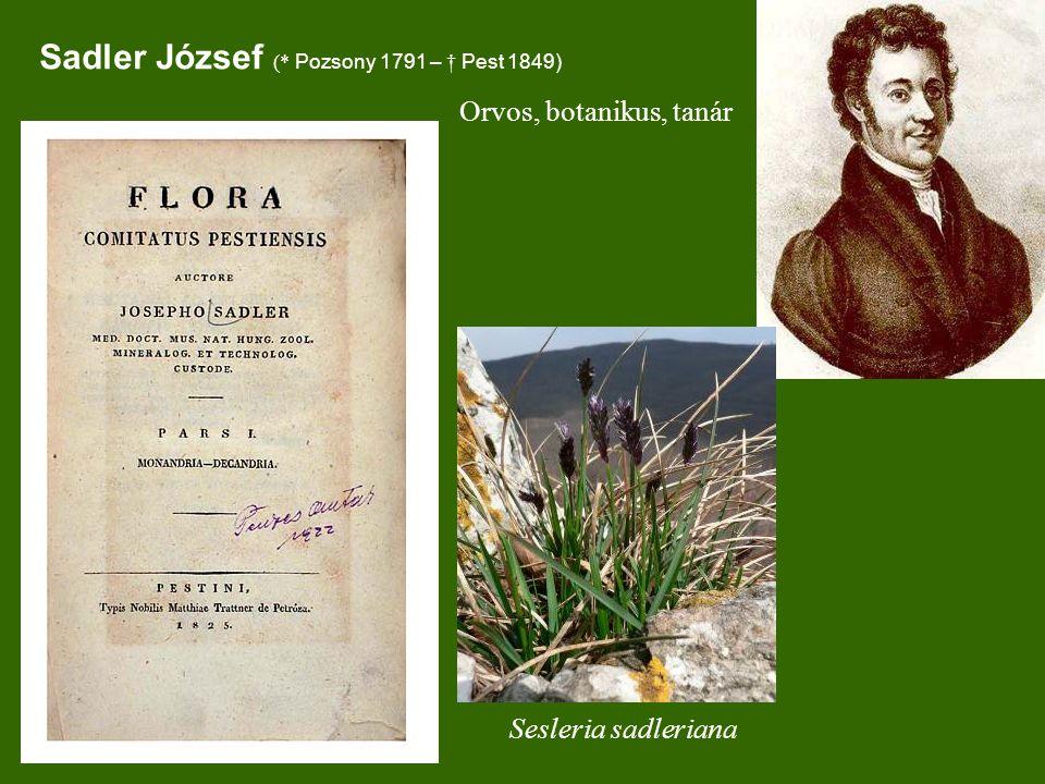 Sesleria sadleriana Sadler József (* Pozsony 1791 – † Pest 1849) Orvos, botanikus, tanár