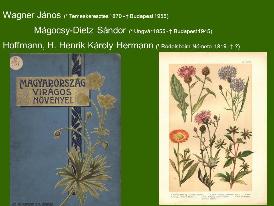 Wagner János (* Temeskeresztes 1870 - † Budapest 1955) Hoffmann, H.