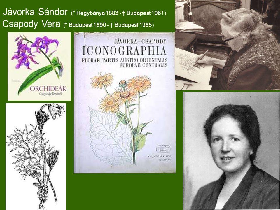 Jávorka Sándor (* Hegybánya 1883 - † Budapest 1961) Csapody Vera (* Budapest 1890 - † Budapest 1985)