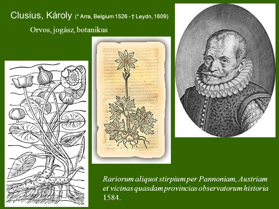 Clusius, Károly (* Arra, Belgium 1526 - † Leydn, 1609) Rariorum aliquot stirpium per Pannoniam, Austriam et vicinas quasdam provincias observatorum historia 1584.