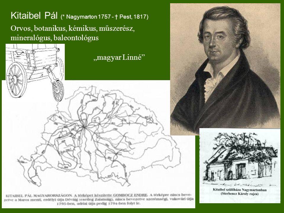 """Kitaibel Pál (* Nagymarton 1757 - † Pest, 1817) Orvos, botanikus, kémikus, műszerész, mineralógus, baleontológus """"magyar Linné"""
