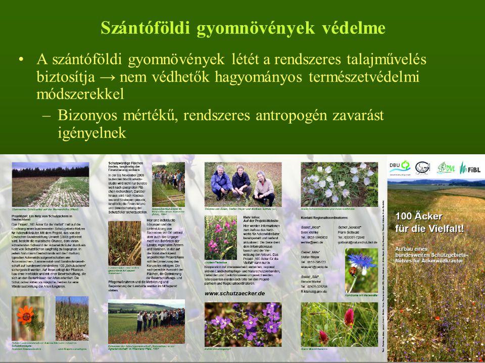 Szántóföldi gyomnövények védelme A szántóföldi gyomnövények létét a rendszeres talajművelés biztosítja → nem védhetők hagyományos természetvédelmi módszerekkel –Bizonyos mértékű, rendszeres antropogén zavarást igényelnek