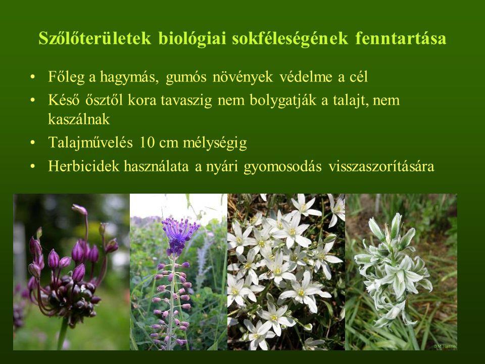 Szőlőterületek biológiai sokféleségének fenntartása Főleg a hagymás, gumós növények védelme a cél Késő ősztől kora tavaszig nem bolygatják a talajt, nem kaszálnak Talajművelés 10 cm mélységig Herbicidek használata a nyári gyomosodás visszaszorítására