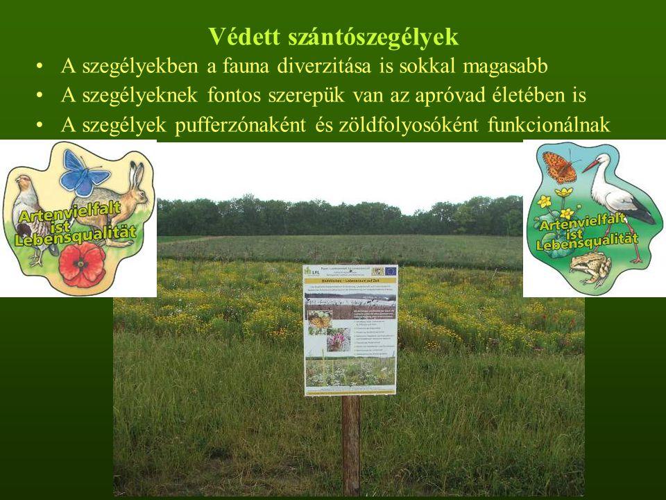 Védett szántószegélyek A szegélyekben a fauna diverzitása is sokkal magasabb A szegélyeknek fontos szerepük van az apróvad életében is A szegélyek pufferzónaként és zöldfolyosóként funkcionálnak