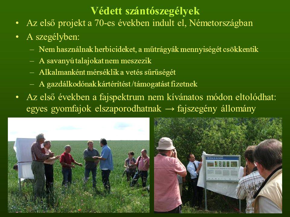 Védett szántószegélyek Az első projekt a 70-es években indult el, Németországban A szegélyben: –Nem használnak herbicideket, a műtrágyák mennyiségét csökkentik –A savanyú talajokat nem meszezik –Alkalmanként mérséklik a vetés sűrűségét –A gazdálkodónak kártérítést /támogatást fizetnek Az első években a fajspektrum nem kívánatos módon eltolódhat: egyes gyomfajok elszaporodhatnak → fajszegény állomány