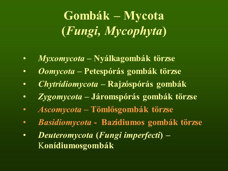 Gombák – Mycota (Fungi, Mycophyta) Myxomycota – Nyálkagombák törzse Oomycota – Petespórás gombák törzse Chytridiomycota – Rajzóspórás gombák Zygomycot
