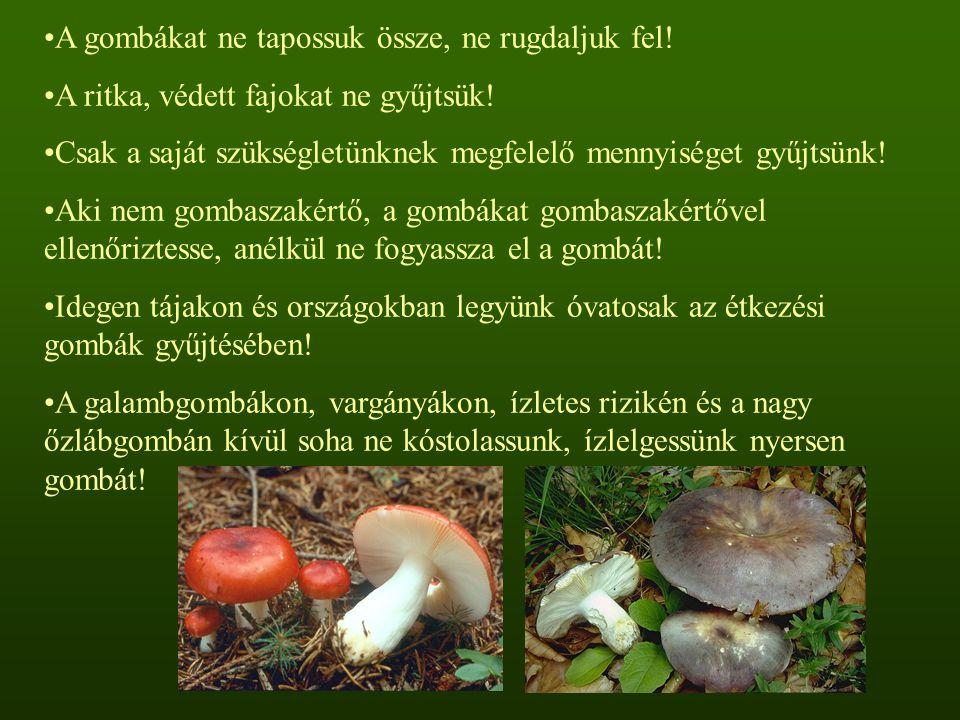 A gombákat ne tapossuk össze, ne rugdaljuk fel! A ritka, védett fajokat ne gyűjtsük! Csak a saját szükségletünknek megfelelő mennyiséget gyűjtsünk! Ak