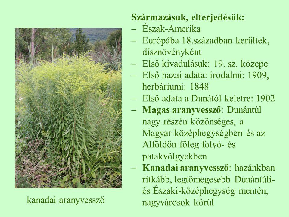 Származásuk, elterjedésük: –Észak-Amerika –Európába 18.században kerültek, dísznövényként –Első kivadulásuk: 19. sz. közepe –Első hazai adata: irodalm
