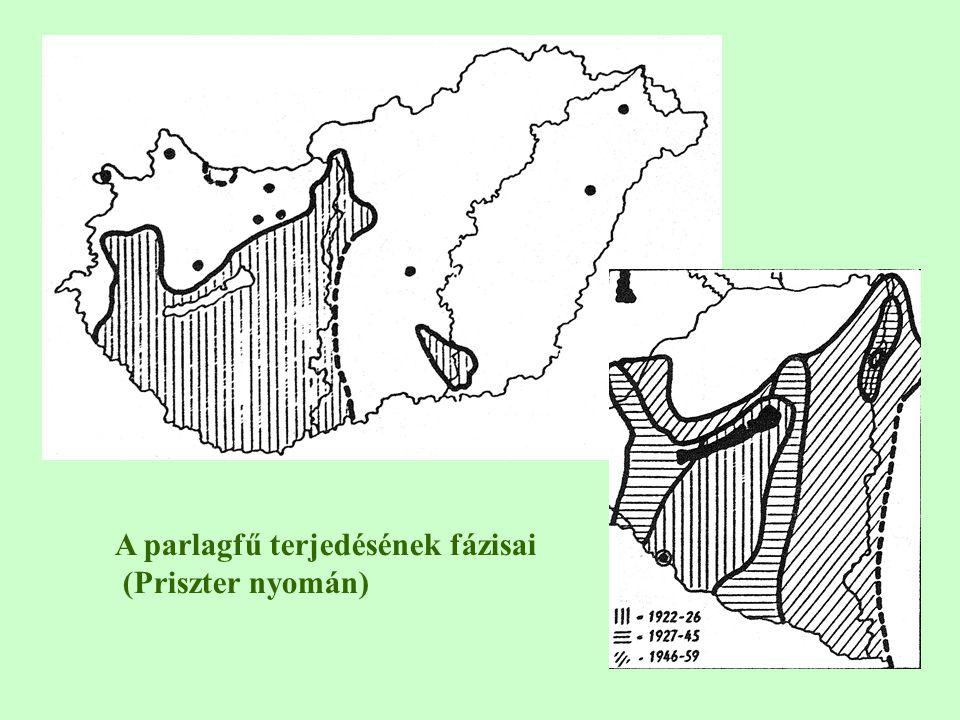 A parlagfű terjedésének fázisai (Priszter nyomán)
