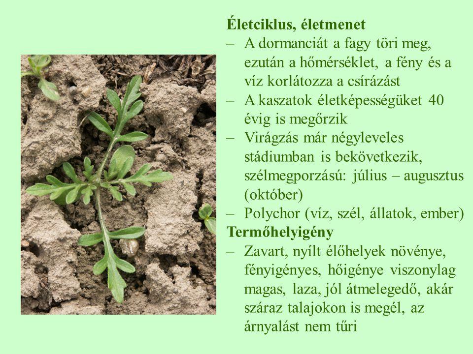 Biotikus interakciók –allelopatikus több kultúrnövényre –Kompetíciója még nagyobb jelentőségű lehet –Az árnyékolást rosszul tűrik –Magyarországon 174 rovarfogyasztójának többsége polifág –Legelő állatok megeszik, de nem kedvelik –Számos gombakártevője ismert Gazdasági jelentőség –Európában nincs pozitív jelentősége –Minden mezőgazdasági kultúrában előfordul, kb.