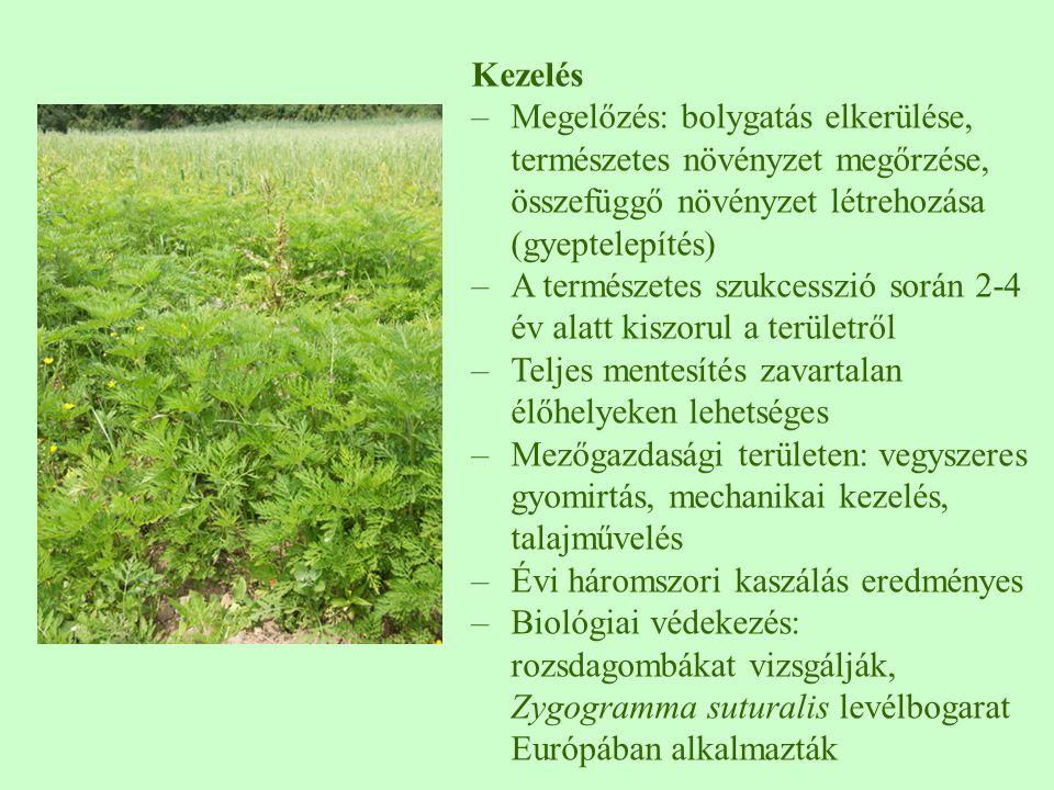 Kezelés –Megelőzés: bolygatás elkerülése, természetes növényzet megőrzése, összefüggő növényzet létrehozása (gyeptelepítés) –A természetes szukcesszió