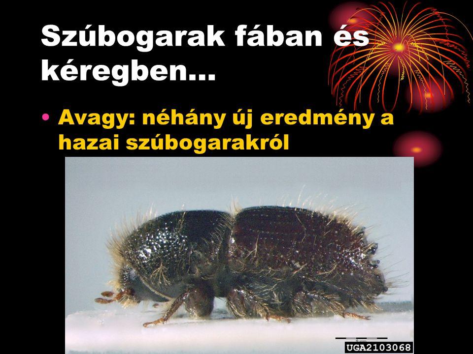 1. Szúbogarak fában Xyloterus (Trypodendron) fajok Xylosandrus germanus