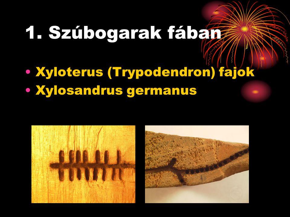 Xyloterus (Trypodendron) fajok Hazánkban előforduló fajok: Xyloterus lineatus – sávos fenyőszú Xyloterus domesticus – varratos bükkszú Xyloterus signatus – lombfarágó szú