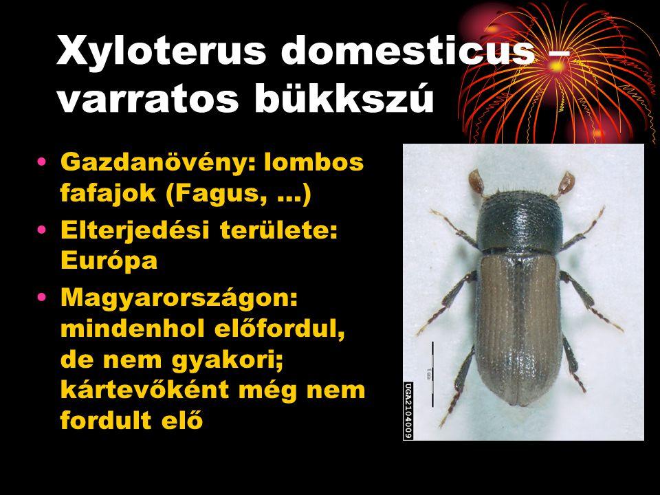 Xyloterus domesticus – varratos bükkszú Gazdanövény: lombos fafajok (Fagus, …) Elterjedési területe: Európa Magyarországon: mindenhol előfordul, de ne