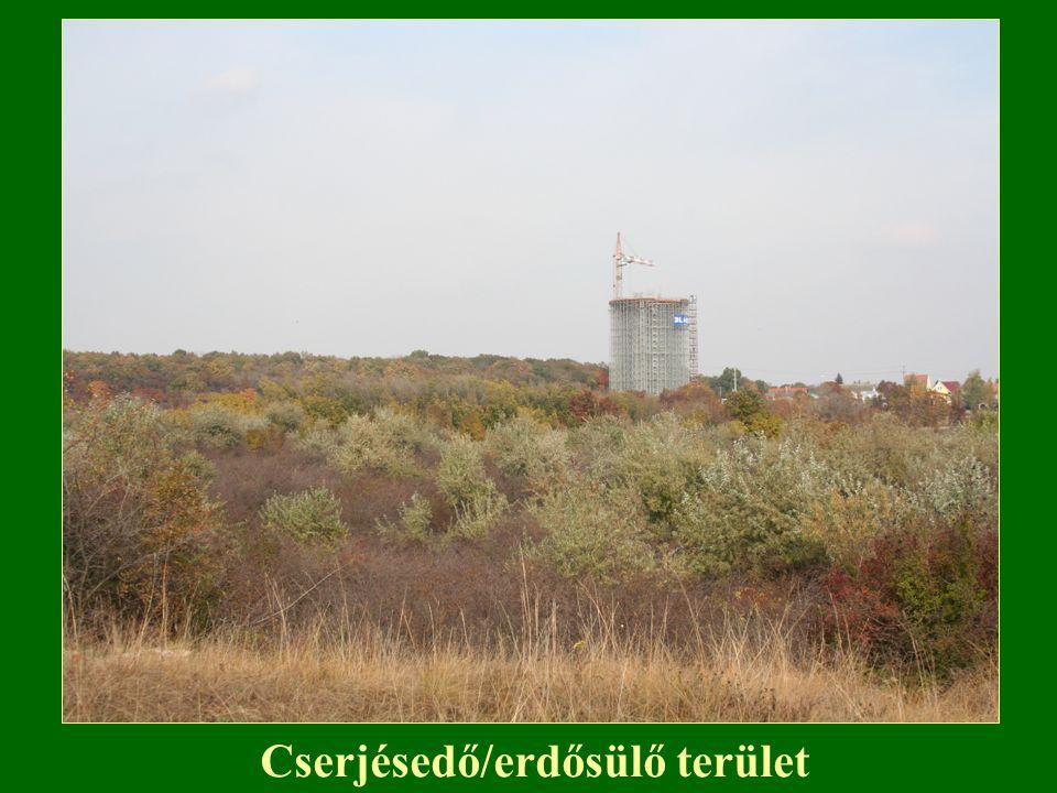Cserjésedő/erdősülő terület
