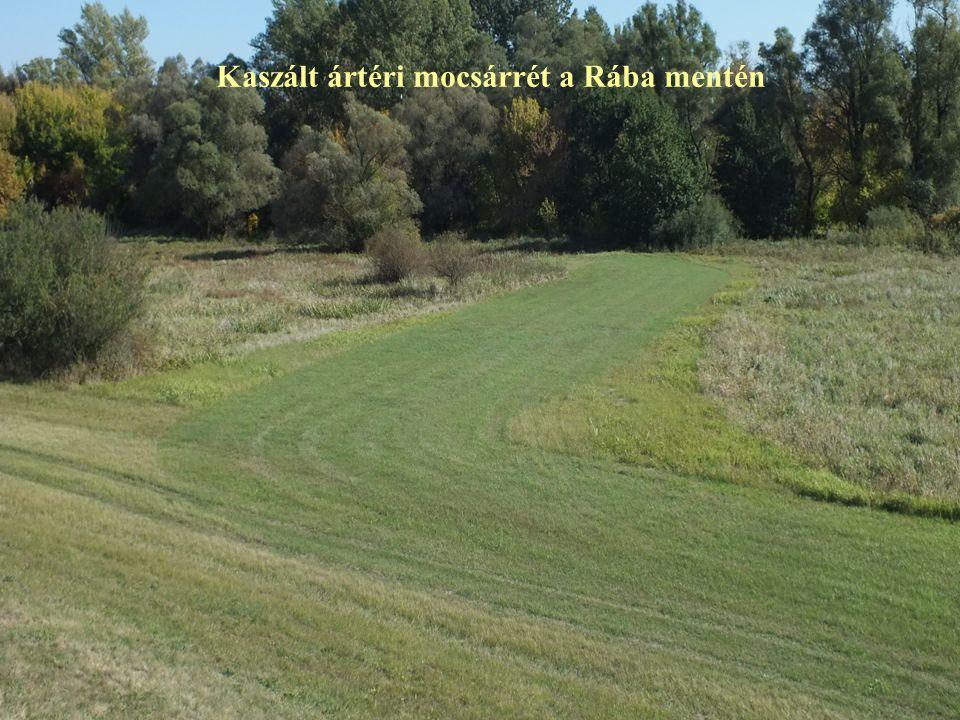 Kaszált ártéri mocsárrét a Rába mentén