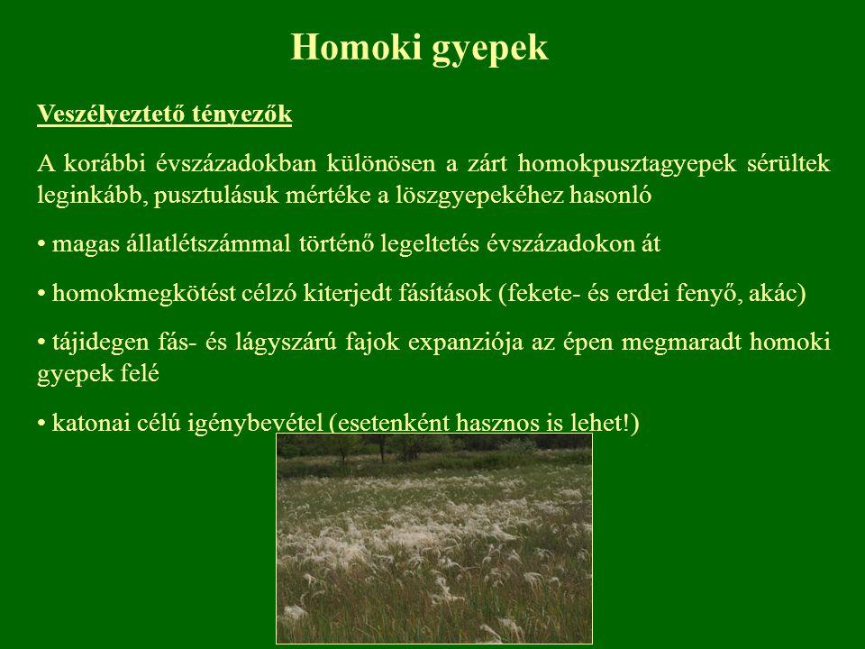 Homoki gyepek Veszélyeztető tényezők A korábbi évszázadokban különösen a zárt homokpusztagyepek sérültek leginkább, pusztulásuk mértéke a löszgyepekéh