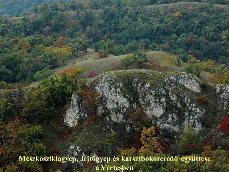Mészkősziklagyep, lejtőgyep és karsztbokoreredő együttese a Vértesben