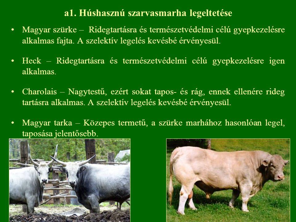 Magyar szürke – Ridegtartásra és természetvédelmi célú gyepkezelésre alkalmas fajta. A szelektív legelés kevésbé érvényesül. Heck – Ridegtartásra és t