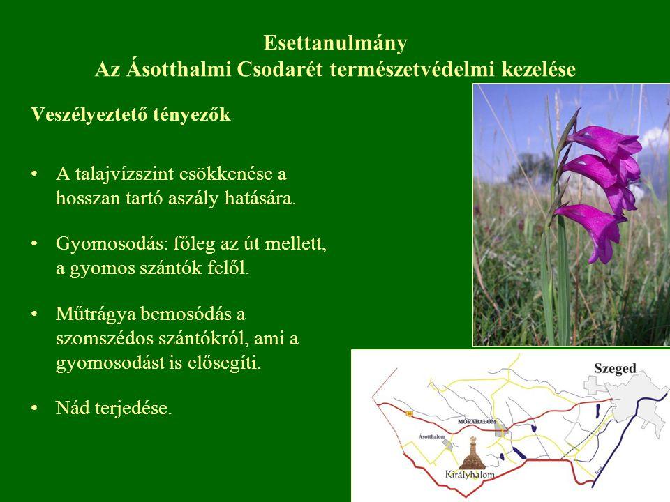 Esettanulmány Az Ásotthalmi Csodarét természetvédelmi kezelése Veszélyeztető tényezők A talajvízszint csökkenése a hosszan tartó aszály hatására. Gyom