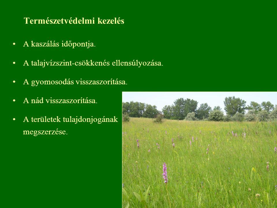 Természetvédelmi kezelés A kaszálás időpontja. A talajvízszint-csökkenés ellensúlyozása. A gyomosodás visszaszorítása. A nád visszaszorítása. A terüle