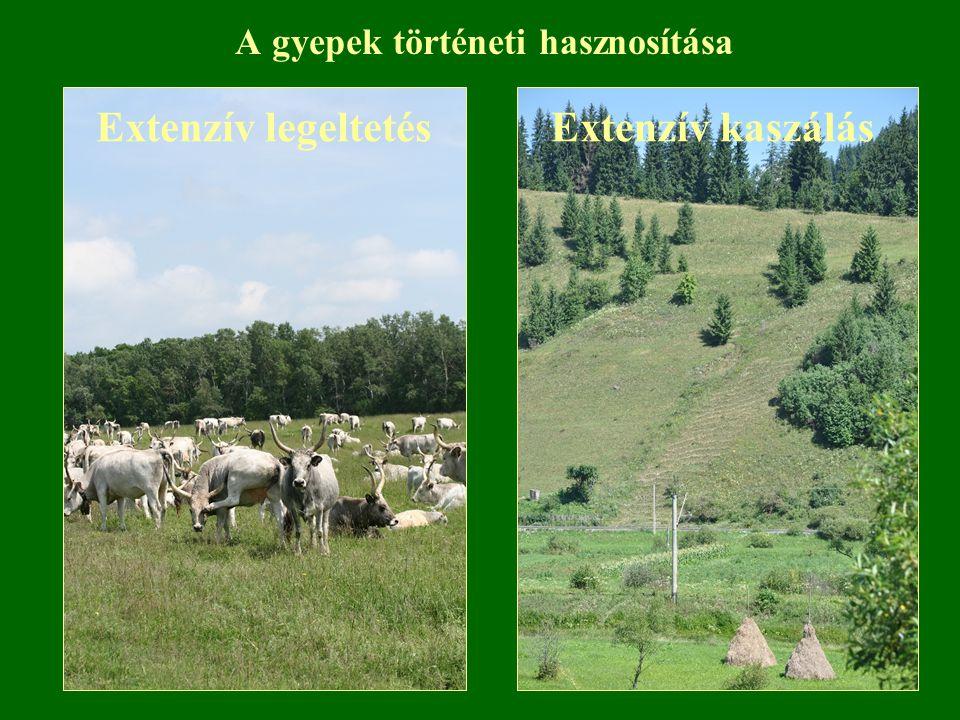 Extenzív gyepgazdálkodás hatása Nagyobb a természetszerű vegetáció aránya, mint az intenzív rendszerek esetében.