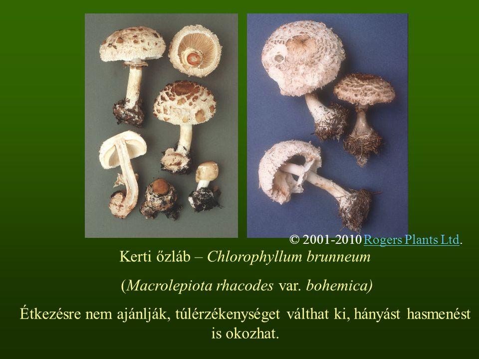 Kerti őzláb – Chlorophyllum brunneum (Macrolepiota rhacodes var. bohemica) Étkezésre nem ajánlják, túlérzékenységet válthat ki, hányást hasmenést is o