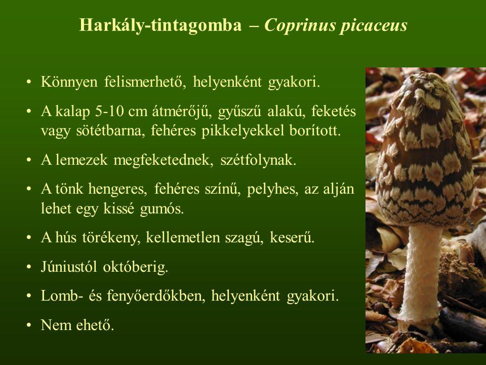 Harkály-tintagomba – Coprinus picaceus Könnyen felismerhető, helyenként gyakori. A kalap 5-10 cm átmérőjű, gyűszű alakú, feketés vagy sötétbarna, fehé