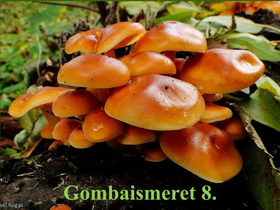Collybia fusipes – Árvégű fülőke Collybia peronata – Gyapjaslábú fülőke Collybia butyracea – Bunkóslábú fülőke Collybia dryophila – Rozsdásszárú fülőke