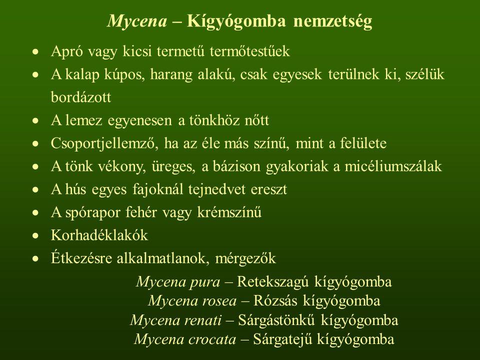 Mycena – Kígyógomba nemzetség  Apró vagy kicsi termetű termőtestűek  A kalap kúpos, harang alakú, csak egyesek terülnek ki, szélük bordázott  A lemez egyenesen a tönkhöz nőtt  Csoportjellemző, ha az éle más színű, mint a felülete  A tönk vékony, üreges, a bázison gyakoriak a micéliumszálak  A hús egyes fajoknál tejnedvet ereszt  A spórapor fehér vagy krémszínű  Korhadéklakók  Étkezésre alkalmatlanok, mérgezők Mycena pura – Retekszagú kígyógomba Mycena rosea – Rózsás kígyógomba Mycena renati – Sárgástönkű kígyógomba Mycena crocata – Sárgatejű kígyógomba
