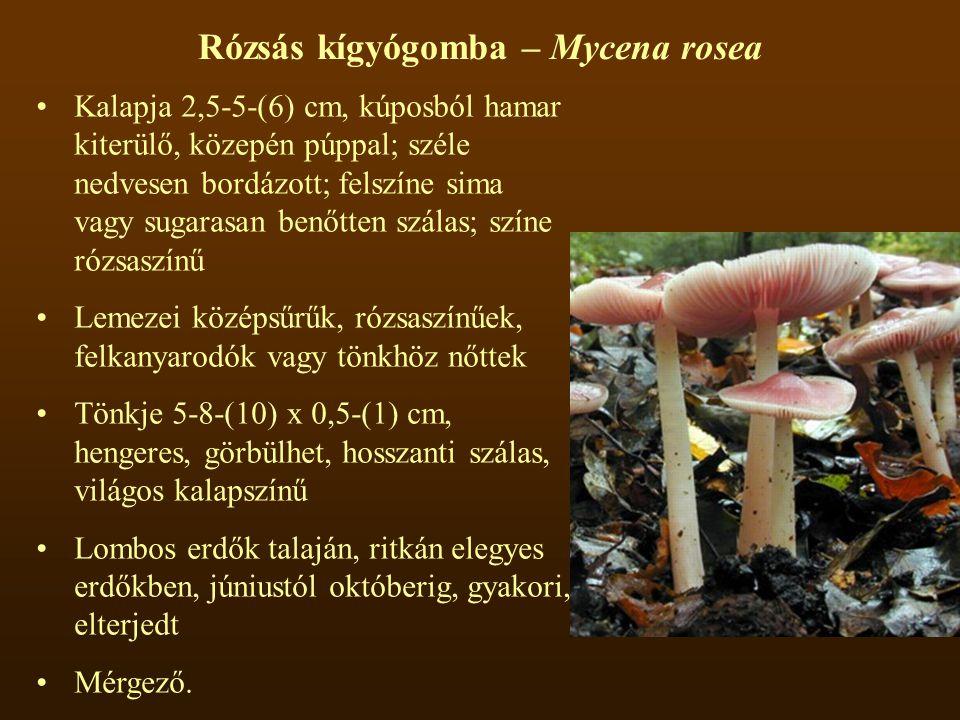 Rózsás kígyógomba – Mycena rosea Kalapja 2,5-5-(6) cm, kúposból hamar kiterülő, közepén púppal; széle nedvesen bordázott; felszíne sima vagy sugarasan benőtten szálas; színe rózsaszínű Lemezei középsűrűk, rózsaszínűek, felkanyarodók vagy tönkhöz nőttek Tönkje 5-8-(10) x 0,5-(1) cm, hengeres, görbülhet, hosszanti szálas, világos kalapszínű Lombos erdők talaján, ritkán elegyes erdőkben, júniustól októberig, gyakori, elterjedt Mérgező.