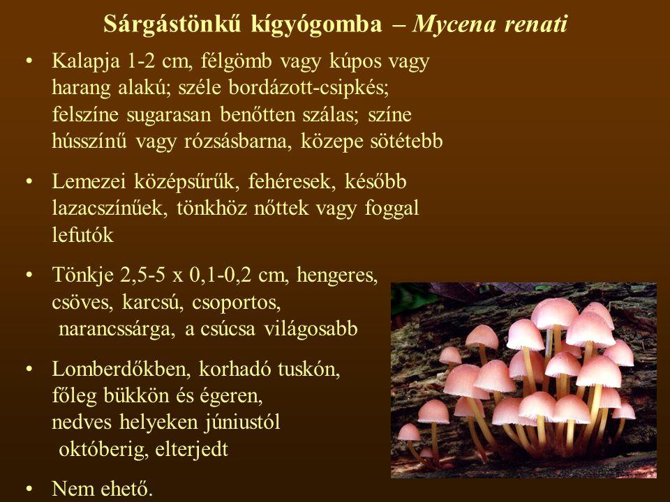 Sárgástönkű kígyógomba – Mycena renati Kalapja 1-2 cm, félgömb vagy kúpos vagy harang alakú; széle bordázott-csipkés; felszíne sugarasan benőtten szálas; színe hússzínű vagy rózsásbarna, közepe sötétebb Lemezei középsűrűk, fehéresek, később lazacszínűek, tönkhöz nőttek vagy foggal lefutók Tönkje 2,5-5 x 0,1-0,2 cm, hengeres, csöves, karcsú, csoportos, narancssárga, a csúcsa világosabb Lomberdőkben, korhadó tuskón, főleg bükkön és égeren, nedves helyeken júniustól októberig, elterjedt Nem ehető.