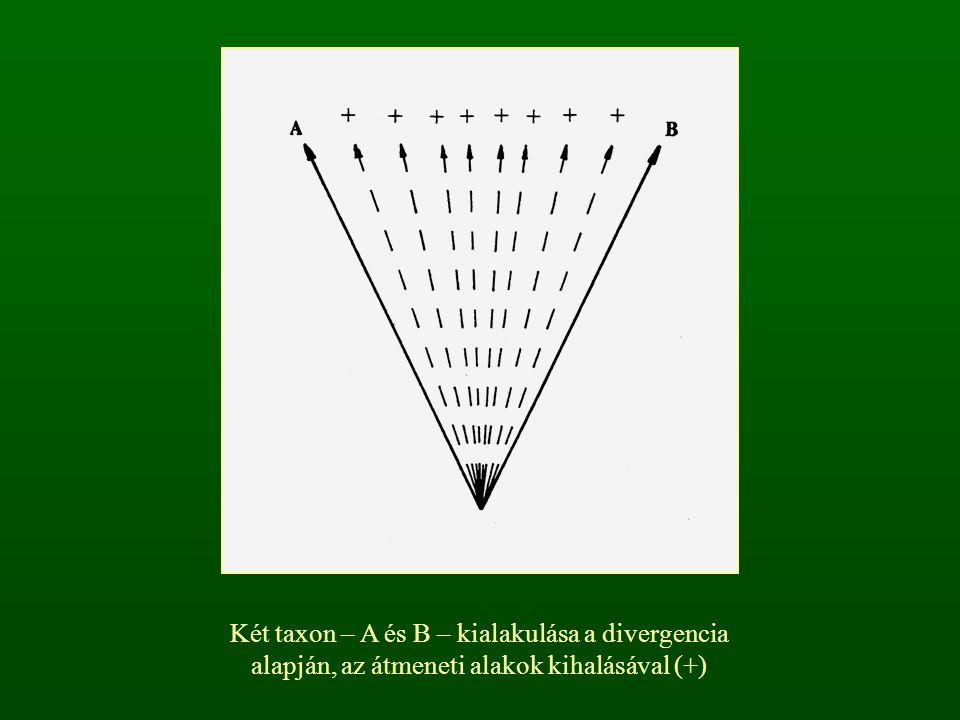 Két taxon – A és C – keletkezése az eredeti taxon areájának (elterjedési területének) szétválásával [ B: átmeneti populációk]
