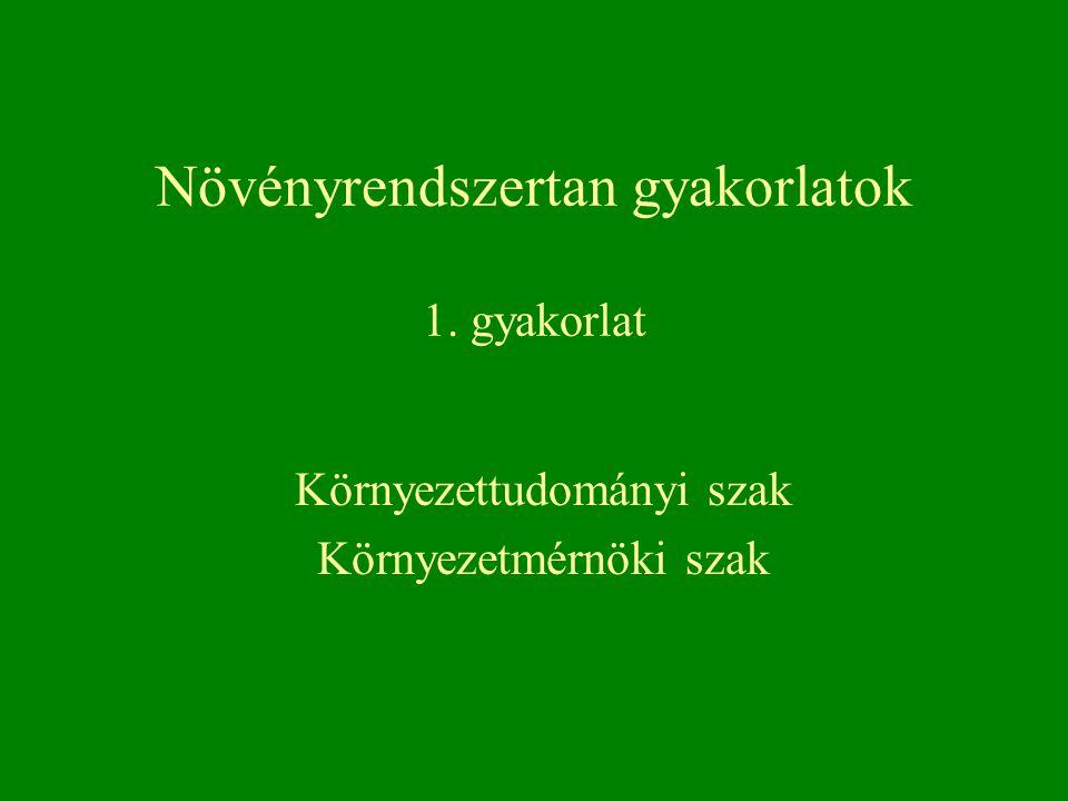 Myxomycota - nyálkagombák törzse Kakukknyál – Mucilago spongiosa