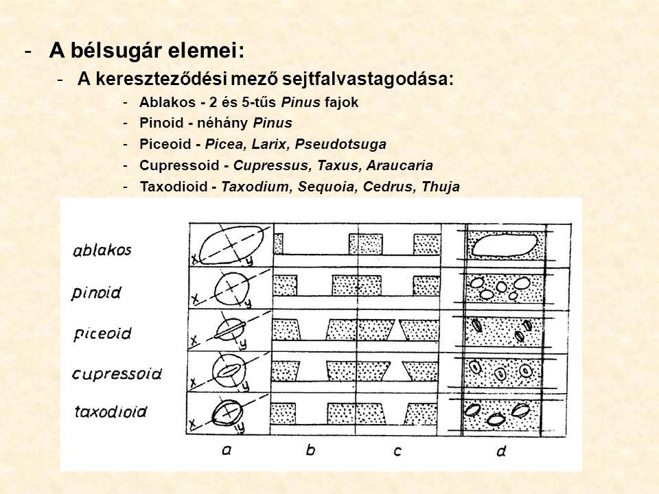 -A bélsugár elemei: -A kereszteződési mező sejtfalvastagodása: -Ablakos - 2 és 5-tűs Pinus fajok -Pinoid - néhány Pinus -Piceoid - Picea, Larix, Pseud