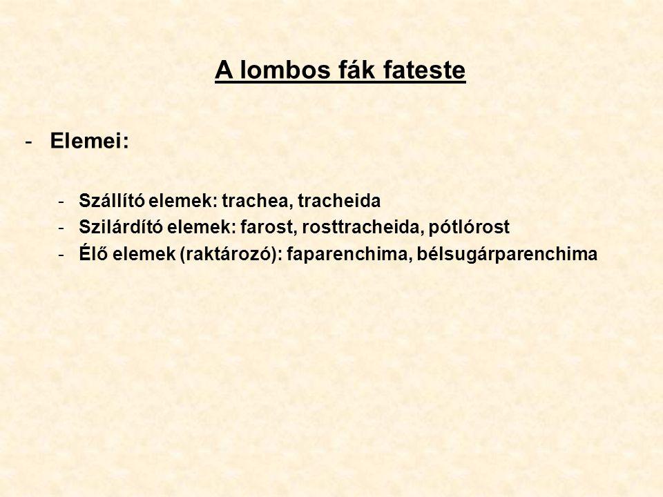 A lombos fák fateste -Elemei: -Szállító elemek: trachea, tracheida -Szilárdító elemek: farost, rosttracheida, pótlórost -Élő elemek (raktározó): fapar