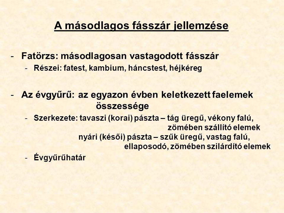 A másodlagos fásszár jellemzése -Fatörzs: másodlagosan vastagodott fásszár -Részei: fatest, kambium, háncstest, héjkéreg -Az évgyűrű: az egyazon évben