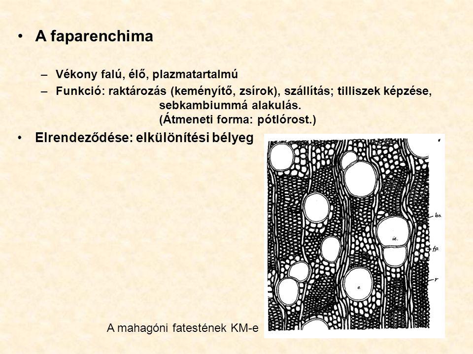 A faparenchima –Vékony falú, élő, plazmatartalmú –Funkció: raktározás (keményítő, zsírok), szállítás; tilliszek képzése, sebkambiummá alakulás. (Átmen