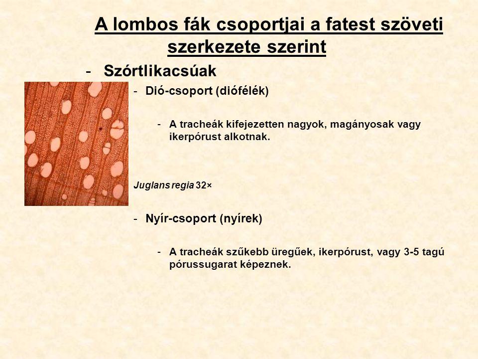A lombos fák csoportjai a fatest szöveti szerkezete szerint -Szórtlikacsúak -Dió-csoport (diófélék) -A tracheák kifejezetten nagyok, magányosak vagy i