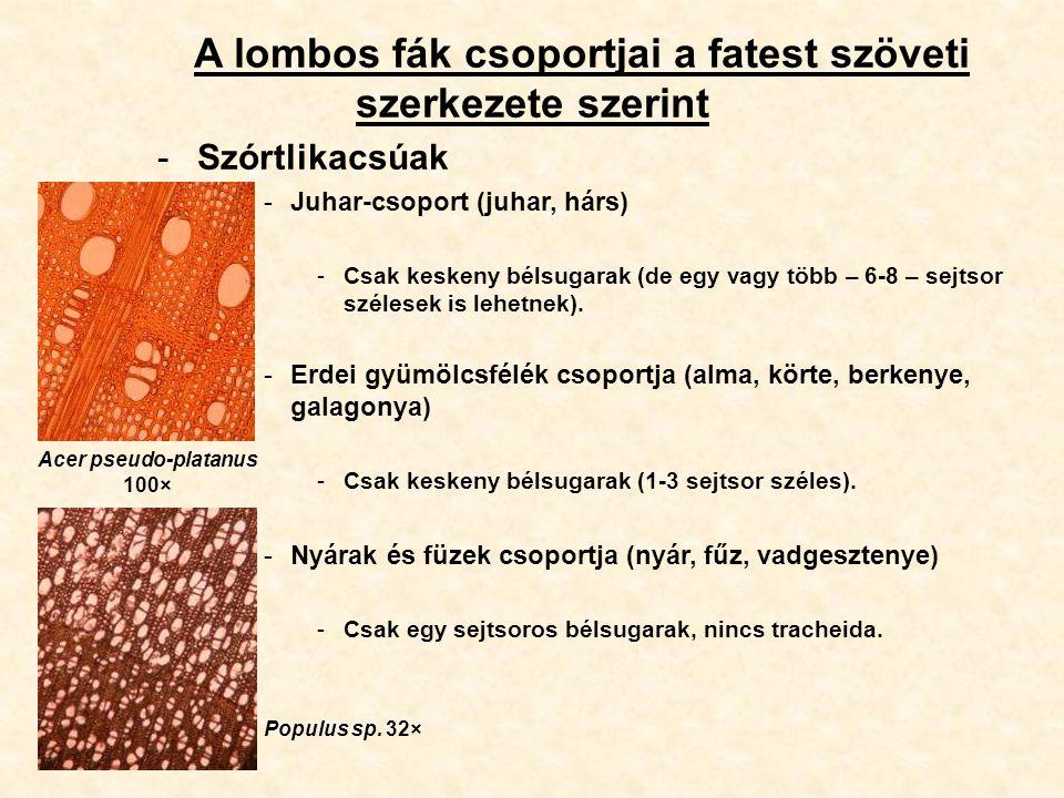 A lombos fák csoportjai a fatest szöveti szerkezete szerint -Szórtlikacsúak -Juhar-csoport (juhar, hárs) -Csak keskeny bélsugarak (de egy vagy több –