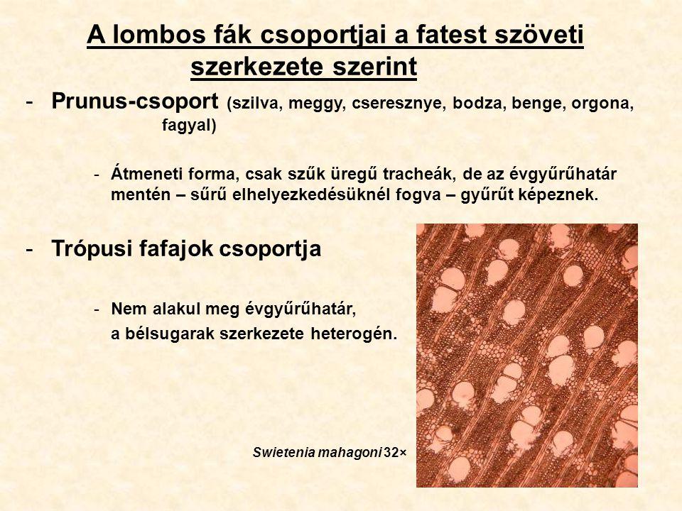 A lombos fák csoportjai a fatest szöveti szerkezete szerint -Prunus-csoport (szilva, meggy, cseresznye, bodza, benge, orgona, fagyal) -Átmeneti forma,