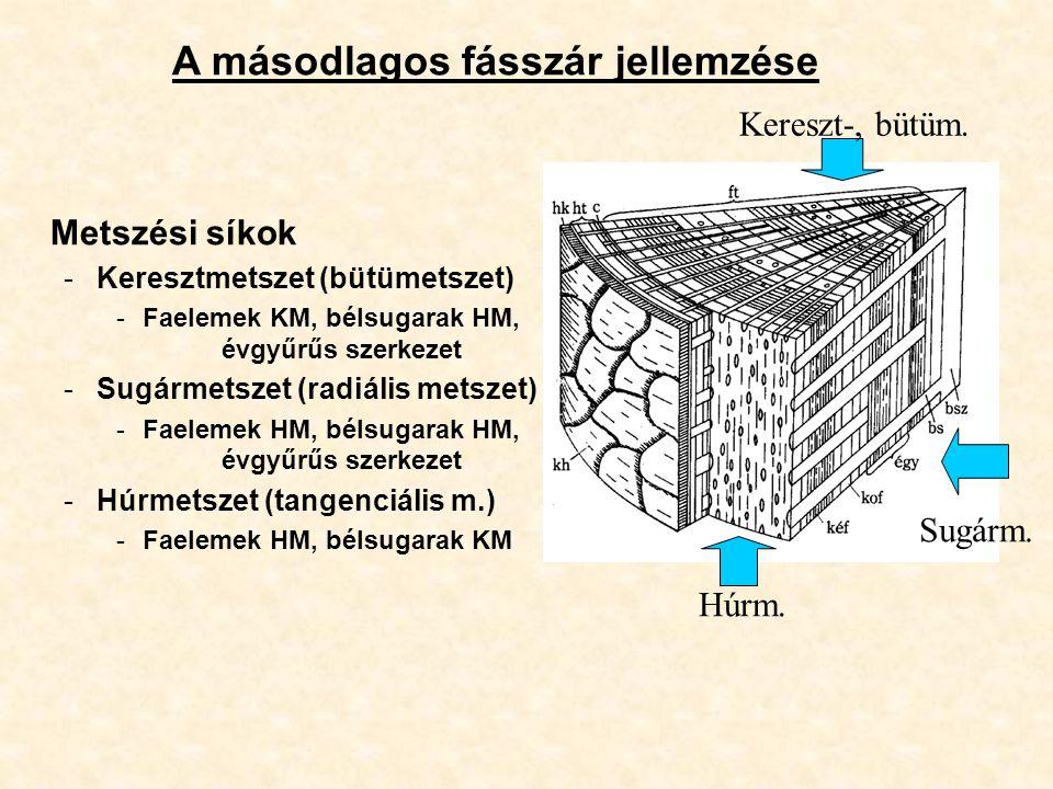 A másodlagos fásszár jellemzése Metszési síkok -Keresztmetszet (bütümetszet) -Faelemek KM, bélsugarak HM, évgyűrűs szerkezet -Sugármetszet (radiális m