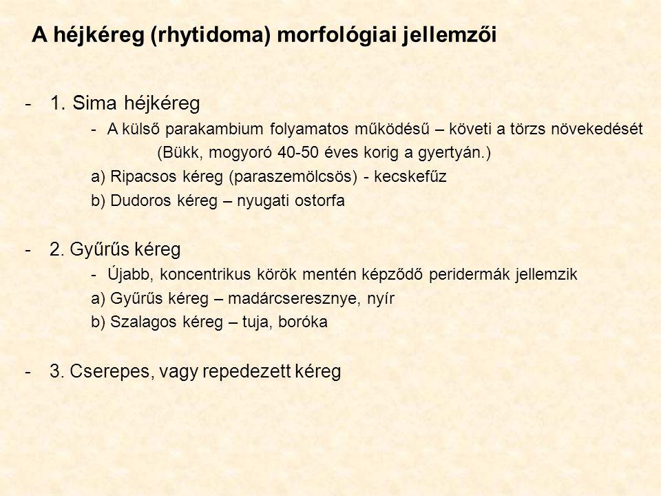 A héjkéreg (rhytidoma) morfológiai jellemzői -1. Sima héjkéreg -A külső parakambium folyamatos működésű – követi a törzs növekedését (Bükk, mogyoró 40