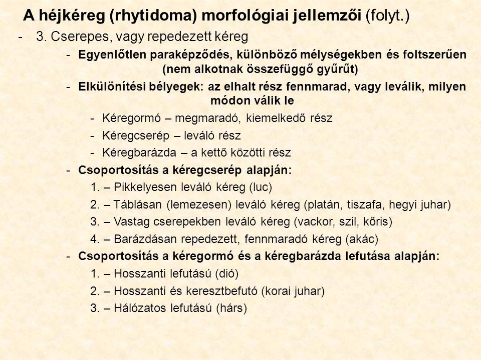 A héjkéreg (rhytidoma) morfológiai jellemzői (folyt.) -3. Cserepes, vagy repedezett kéreg -Egyenlőtlen paraképződés, különböző mélységekben és foltsze